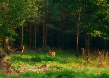 Dzikie zwierzęta podchodzą pod nasza posesję